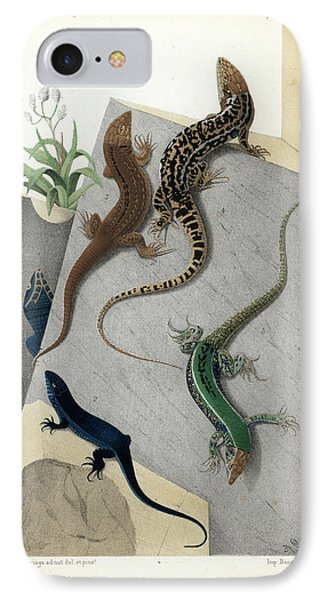 Varieties Of Wall Lizard IPhone Case by Jacques von Bedriaga