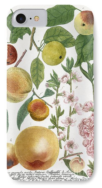 Various Apples With Blossom IPhone Case by Georg Dionysius Ehret