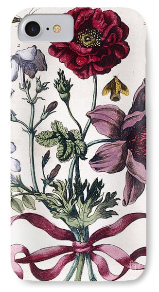 Various European Insects And Flowers IPhone Case by Maria Sibylla Graff Merian