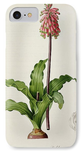 Veltheimia Capensis Phone Case by Pierre Joseph Redoute