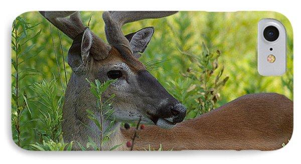Velvet Buck IPhone Case by TnBackroadsPhotos