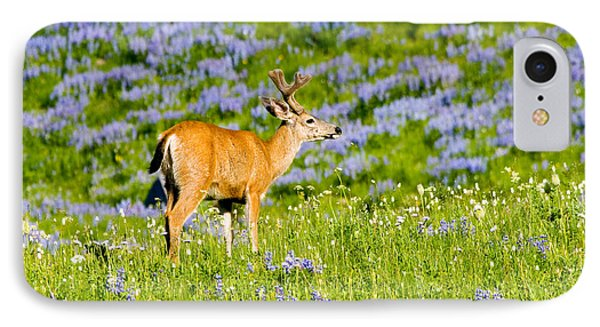 Velvet On Lupine IPhone Case by Mike  Dawson