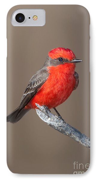 Vermilion Flycatcher IPhone Case