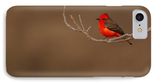 Vermillion Flycatcher On Early Spring Perch Phone Case by Max Allen