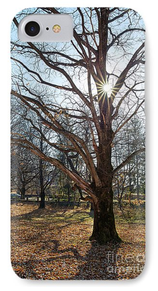 Very Large Oak Trees IPhone Case by Catalin Petolea