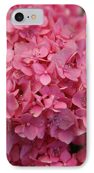 Very Pink Hydrangea Blossoms 2578 H_2 IPhone Case