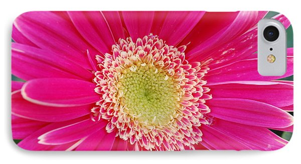 Vibrant Pink Gerber Daisy Phone Case by Amy Fose