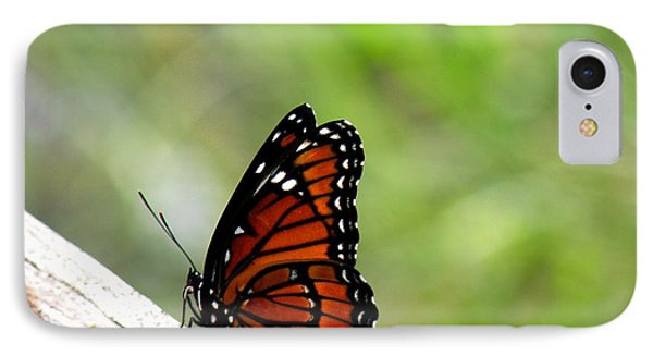 Viceroy Butterfly Side View IPhone Case by Rosalie Scanlon