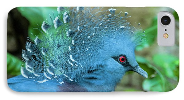 Victoria Crowned Pigeon IPhone Case by Daniel Hebard