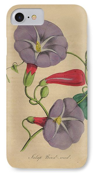 Victorian Botanical Illustration Of Bindweed Or Morning Glory IPhone Case by Peacock Graphics