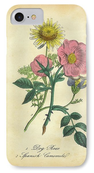 Victorian Botanical Illustration Of Dog Rose And Spanish Camomile IPhone Case by Peacock Graphics