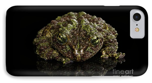 Vietnamese Mossy Frog, Theloderma Corticale Or Tonkin Bug-eyed Frog, Isolated On Black Background IPhone 7 Case