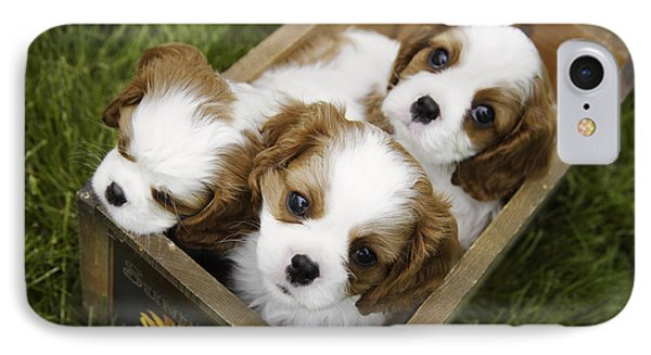 View From Above Of Three Puppies IPhone Case by Gillham Studios