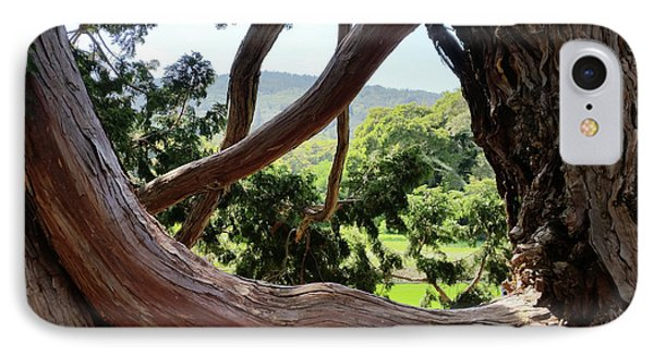View Through The Tree IPhone Case by Carol Lynn Coronios