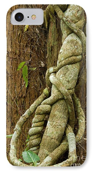 IPhone 7 Case featuring the photograph Vine by Werner Padarin