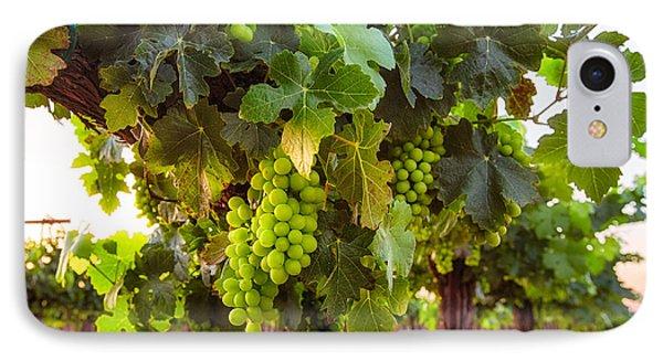 Vineyard 3 IPhone Case