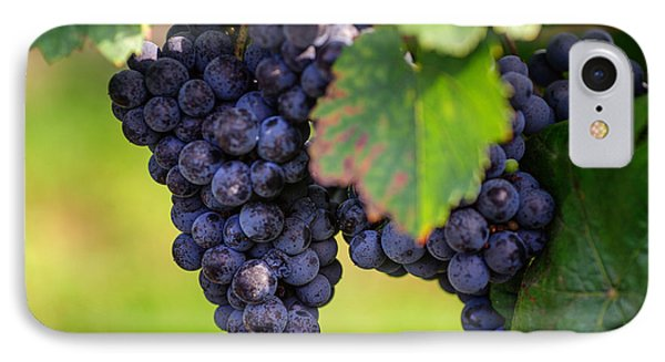 Vineyard Harvest Time IPhone Case by Jenny Rainbow