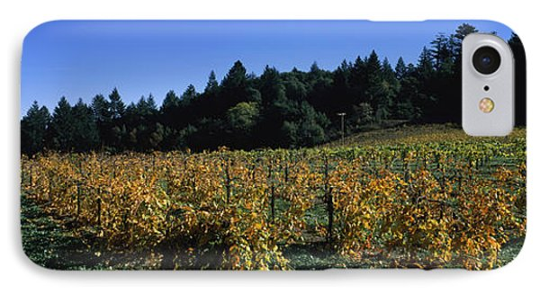 Vineyard In Fall, Sonoma County IPhone Case by Panoramic Images