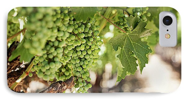 Wine Vineyard Of St. Helena - Grapevine Napa Valley Photography IPhone Case by Melanie Alexandra Price