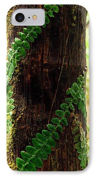 Vining Fern On Sierra Palm Tree Phone Case by Thomas R Fletcher