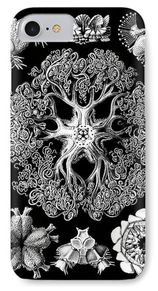 Vintage 1904 Ophiodeax Octopus And Starfish Biological Drawing IPhone Case by Tina Lavoie