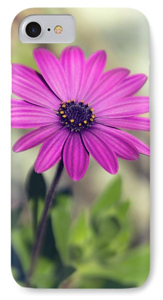 IPhone Case featuring the photograph Vintage Purple Daisy  by Saija Lehtonen