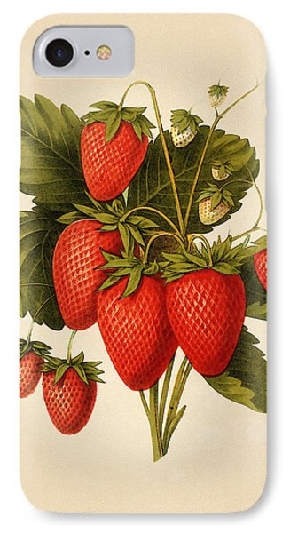 Vintage Strawberries IPhone Case