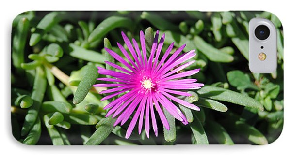 Ice Plant IPhone Case by Isam Awad