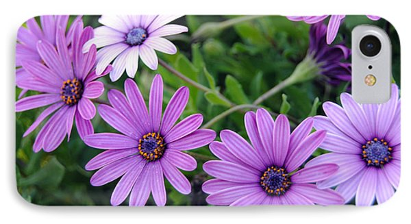 The African Daisy Flowers IPhone Case by Isam Awad