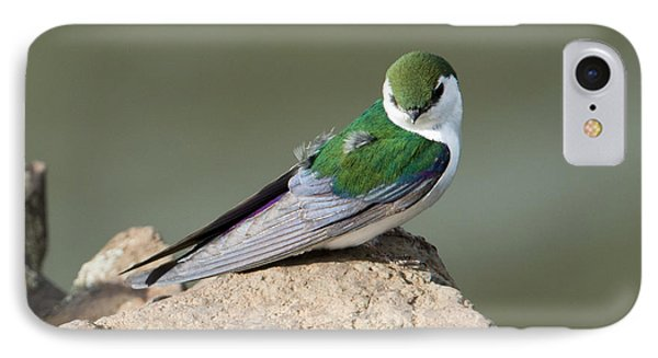 Violet-green Swallow IPhone Case by Mike Dawson