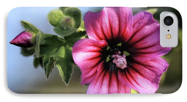 Violet Wild Flower IPhone Case by Stephan Grixti