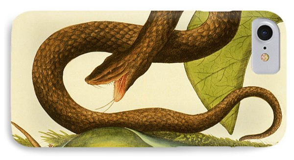 Viper Fusca IPhone Case by Mark Catesby