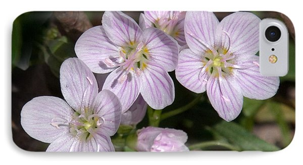 Virginia Or Narrowleaf Spring-beauty Dspf041 IPhone Case by Gerry Gantt