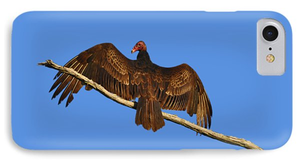 IPhone Case featuring the photograph Vivid Vulture .png by Al Powell Photography USA