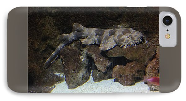 Waiting To Eat You - Spotted Wobbegong Shark IPhone Case by Richard W Linford