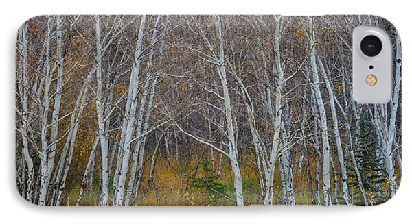 IPhone Case featuring the photograph Walk In The Woods by James BO Insogna