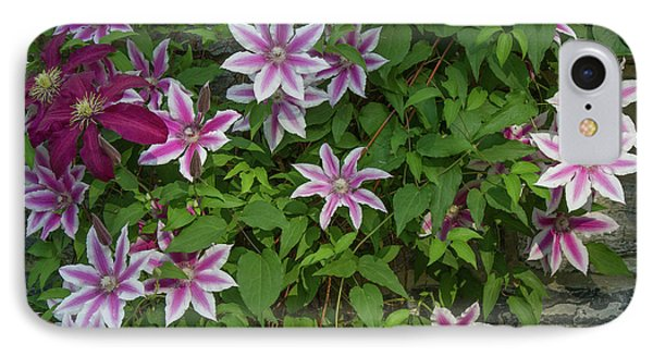 IPhone Case featuring the photograph Wall Flowers by Chris Scroggins