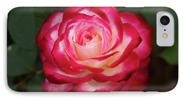 Wall Of Roses Lake Junaluska Great Smoky Mountains North Carolina IPhone Case by Reid Callaway