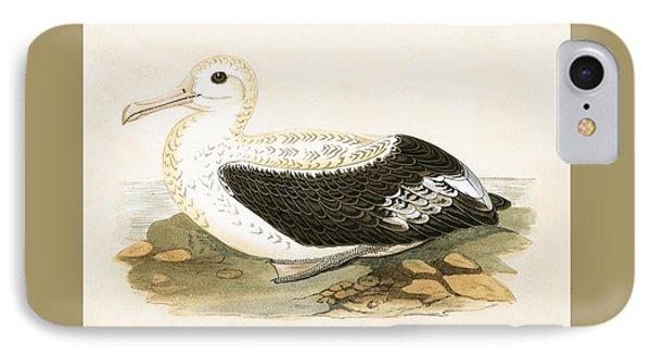 Wandering Albatross IPhone Case by English School