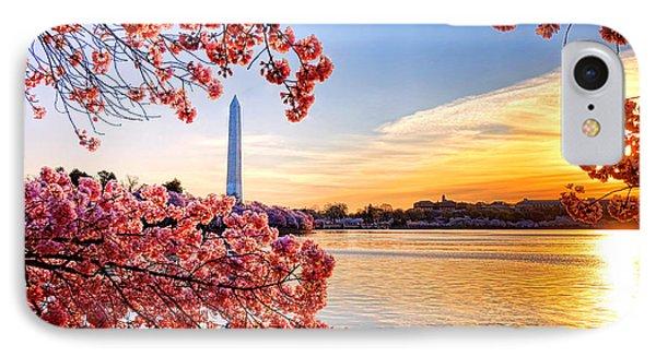 Washington Cherry Tree Sunrise IPhone Case