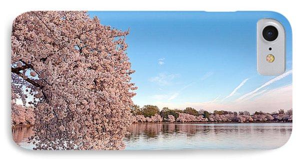 Washington Dc Cherry Blossoms IPhone Case