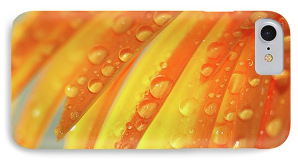 Water Drops On Daisy Petals Phone Case by Daphne Sampson