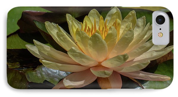Water Lilly 1 IPhone Case