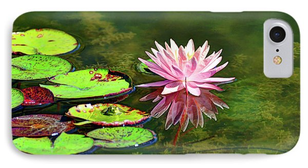 Water Lily And Frog IPhone Case by Savannah Gibbs