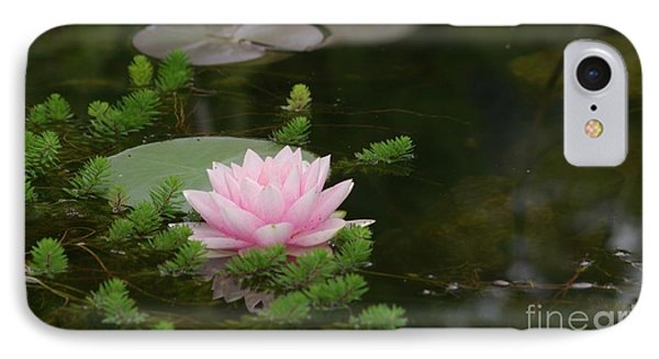 Water Lily IPhone Case by Victor K