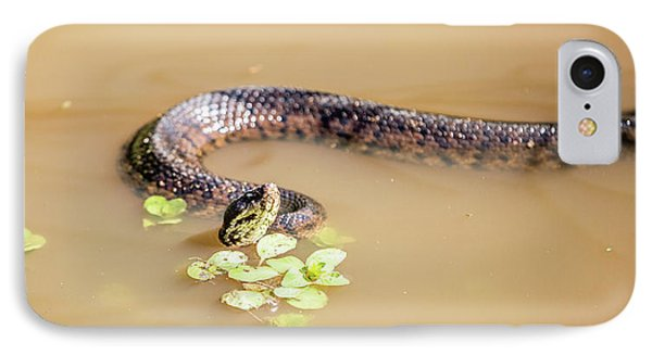 Water Moccasin IPhone Case by Scott Pellegrin