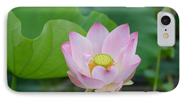Waterlily Blossom With Seed Pod Phone Case by Linda Geiger