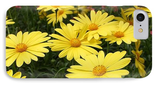 Waves Of Yellow Daisies IPhone Case