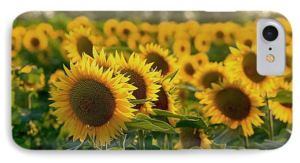 Waving Sunflowers In A Field IPhone Case