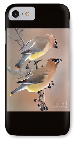 Waxwings IPhone Case by Debbie Stahre